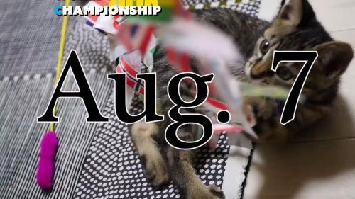ヘボコン・ワールドチャンピオンシップは8/7開催。