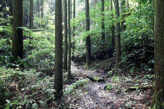 程なくして木々に囲まれた山道となる