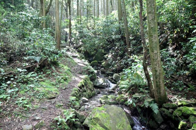沢沿いの道なので確かに湿気がある、昔は広葉樹林でもっと鬱蒼としていたのだろう