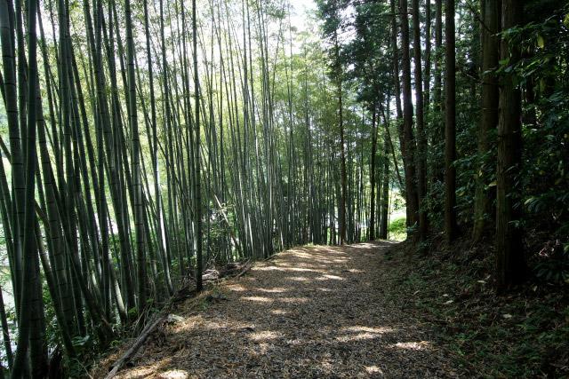 竹の道も風情があって良いものですな