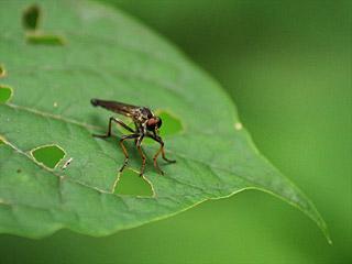 苦手なタイプの虫もマクロだとかっこよく見えるが、これよりワイルドな虫は掲載自粛。