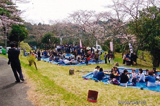 イベントの様子の写真は残念ながら無いが、こちらは桜祭りの様子。子どもたちはたくさんいるので、この後転がすんだと思う
