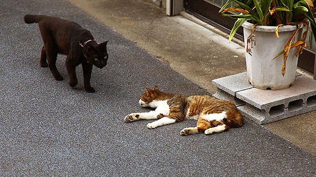 痩せた猫がいる街、浦安。