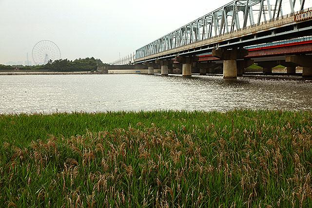 右の青いトラス橋は京葉線。風が吹くとすぐ止まることで有名だったが、最近は色々工夫して風に強くなった。むしろ、3kmほど上流を走っている東西線の方が止まりやすい。