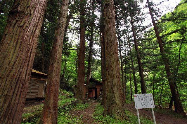 いちばん下まで降りると、深い森の中に建物が