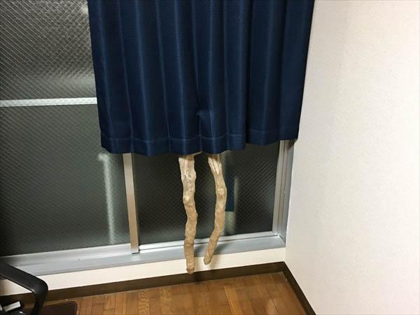 だめだとわかっているけど、一応カーテンの裏に置いてみる。