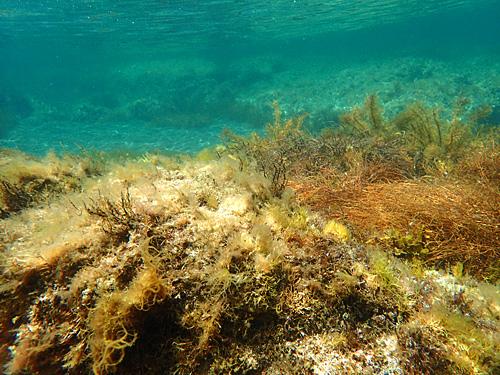 南国のカラフルなサンゴ礁とは違うけれど、これはこれで味わい深い岩肌と海藻群。グルタミン酸が溶けだしていそうな海だ。