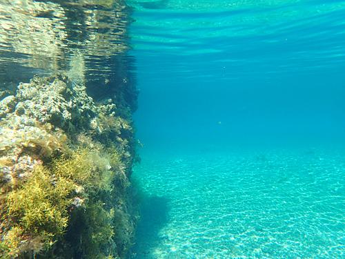 少し深い場所でも海底まで光が届くこの透明度。