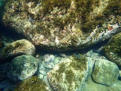 魚はそれほど多くないけれど、よくみればそこかしこに隠れている。