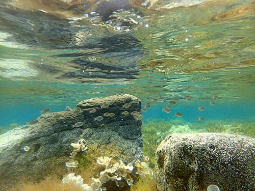 魚は左側のほうが多いかも。これだけ浅いので水温も高い。