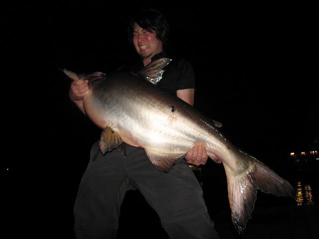 半澤さんの働くタイの釣り堀で巨大なメコンオオナマズを釣り上げた平坂さん