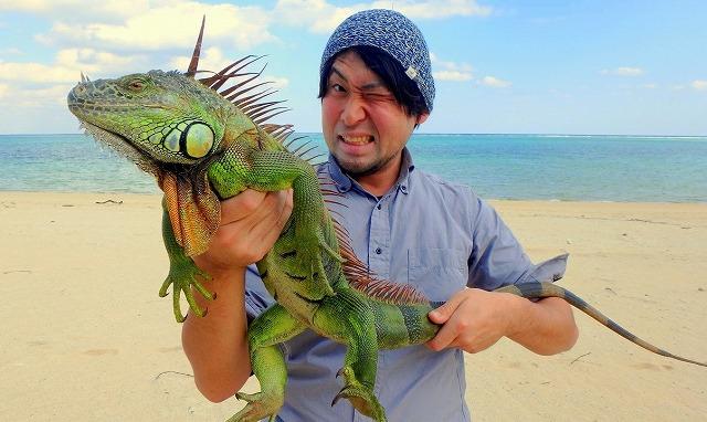 グリーンイグアナ、確保!ここにいちゃいけない生物だってことはわかってるんだけど…。かっこよすぎてつい笑顔に。
