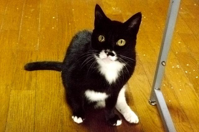警戒心が強く、エサをねだる時以外はあまり近づいてこない猫だ