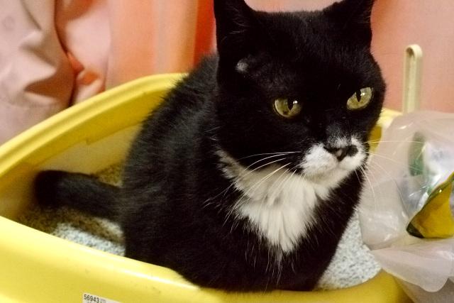 猫はトイレの最中が一番イケメンである。無防備であると本能的に分かっており、真剣な顔つきになるのだろう