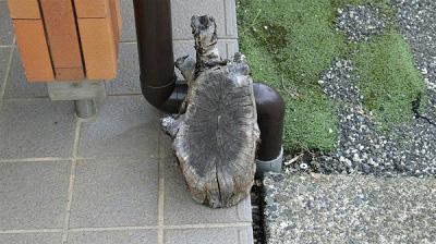 家で亀を飼い始めたのかと思ったら置物だった。
