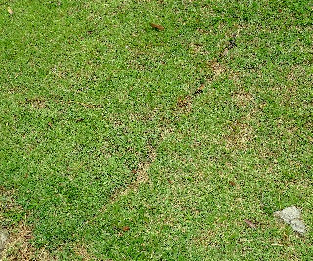 芝生を切り拓いたように綺麗な「道路」になっている。