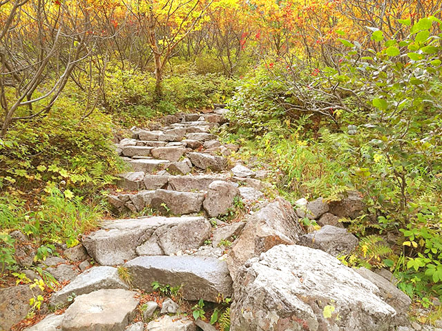 岩が階段状に並べられている。登山道の整備をしてくれた関係者に感謝。ナナカマドが紅葉していた。