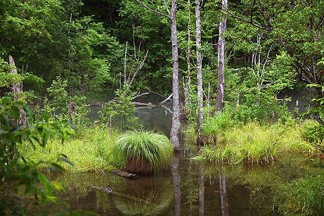 頭みたいな草や池に生える木々。
