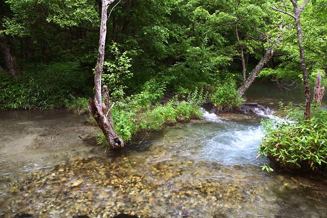 ここまで綺麗な川が本州にあるとは。