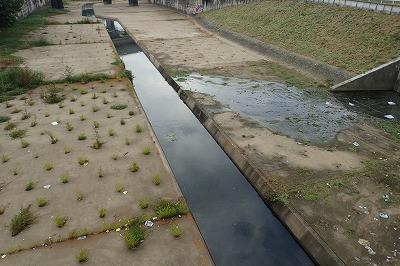 メタンと硫黄の混じった、高度経済成長期のかほり漂う水路。こんな掃き溜めのようなドブが、大ナマズたちの楽園だった。