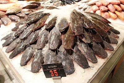 ヒレナマズの仲間は食用魚として、東南アジアを中心に高い人気を誇っている。そう。実はおいしい魚なのだ。