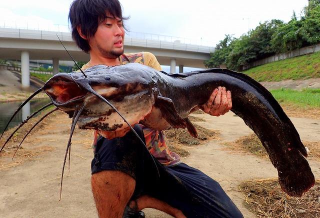川ですらなく水路、いやまさにドブ。近所でいきなり外国人が巨大魚釣りあげて、現地の人も驚愕です。タイトルだけでライターがわかる記事。