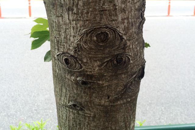 うちの近所の木の目が鋭すぎてかっこいい