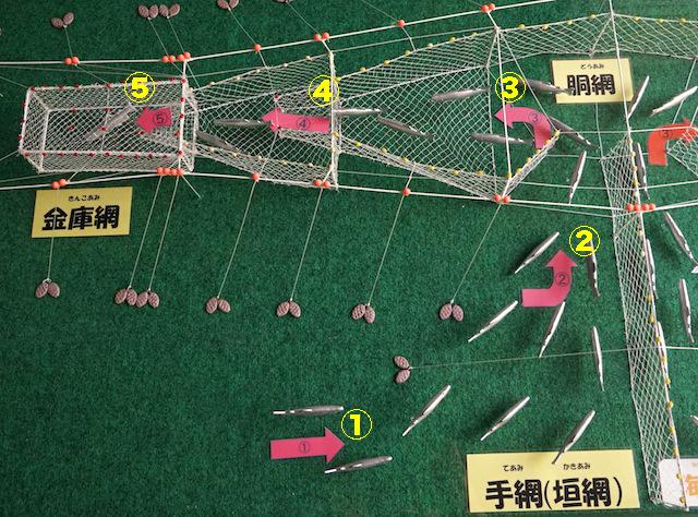 一部拡大。サケは網に沿って①?⑤のルートで進み、出られなくなる。