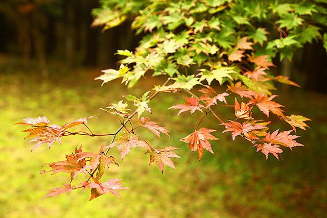 紅葉には早かったが、ちいさく秋になっていた。