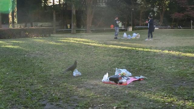振り返ると、ピクニックのために買ってきたお惣菜のからあげを、カラスが狙っていた。