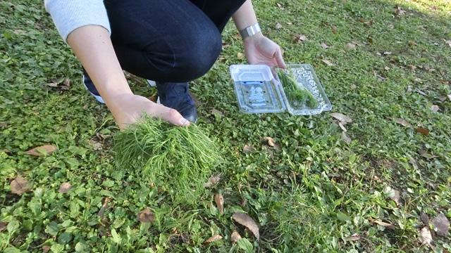 箱から出しただけで既にだいぶ野草だ。右下の塊と何か違うというのか