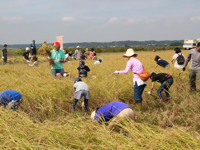 今年9月に行った稲刈り体験の様子