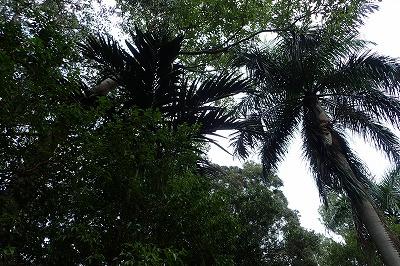 立ち並ぶ木々もTHE・南国といった感じ。