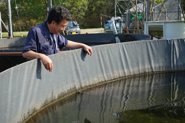サケ科魚類の研究を中心に数々の論文を執筆している館長、市村さんの思いつき。