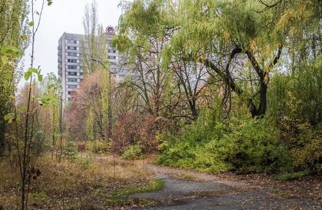 生い茂りまくる樹々のむこうにかっこいい団地!