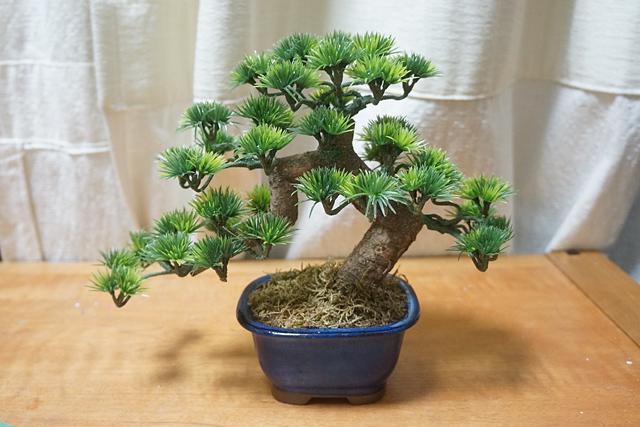 私は植物を育てるのが苦手なのだ。しかしすごく思い切った角度の枝ぶりである。