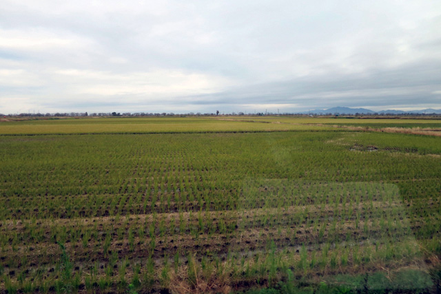 取材日は11月中旬で既に稲刈りは終わっていた