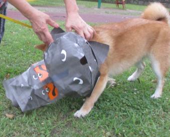 犬も暗黒面に堕ちた。