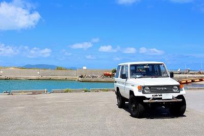 ハブクラゲを観察するには漁港を巡るのが良い。