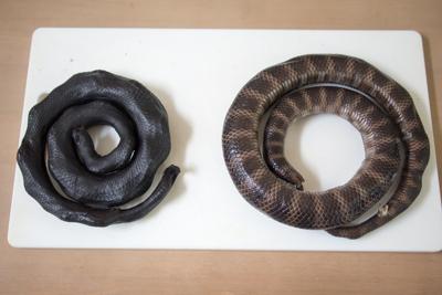 左は市場などで売られている燻製、右は生のやつ