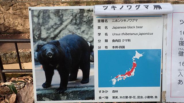 熊は食肉目クマ科に属す。