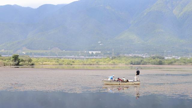 まずはボートに乗ってヒシを採取。この池に浮いている水草のほとんどがヒシだった。