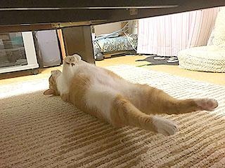 これは猫足(ニャンソク)。たまに「美味そうだなぁ」って思ったりもする。