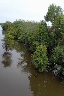 なんかよさげな湿地見つけたぞ!ここでどうだ!
