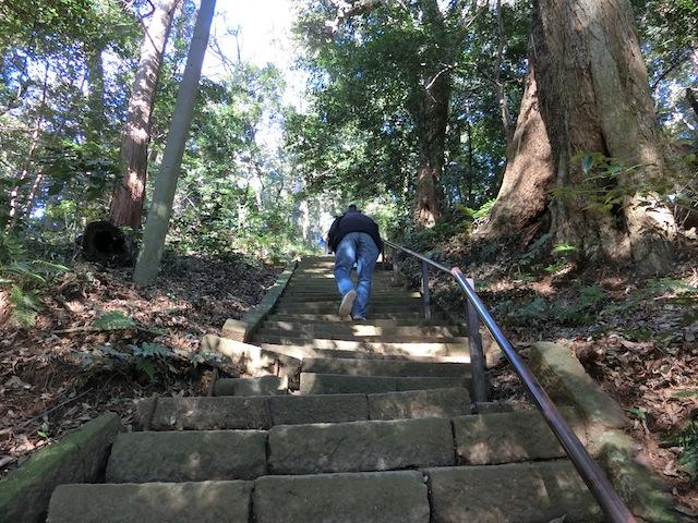 気を抜くと自由落下しそうな傾斜の石段を半泣きで200段以上登る。