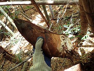 掘ってみるまでどれくらいの大きさなのかわからないのが楽しいのよね。