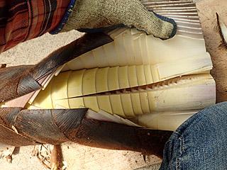 縦に包丁を入れて、そこからメリメリと皮を剥ぐ。
