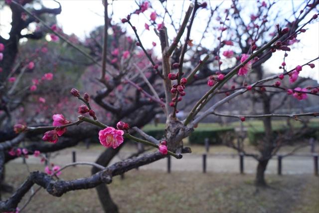 すでにちょっぴり花も咲いていた。