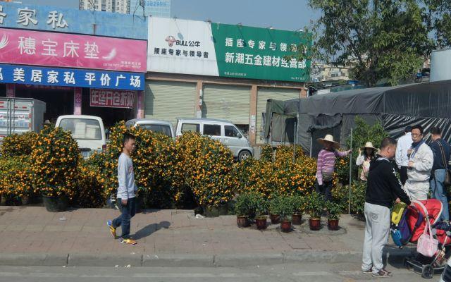 みかんの木がいっぱい売られている!