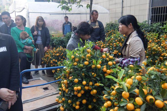 みかん…というか柑橘類だ!